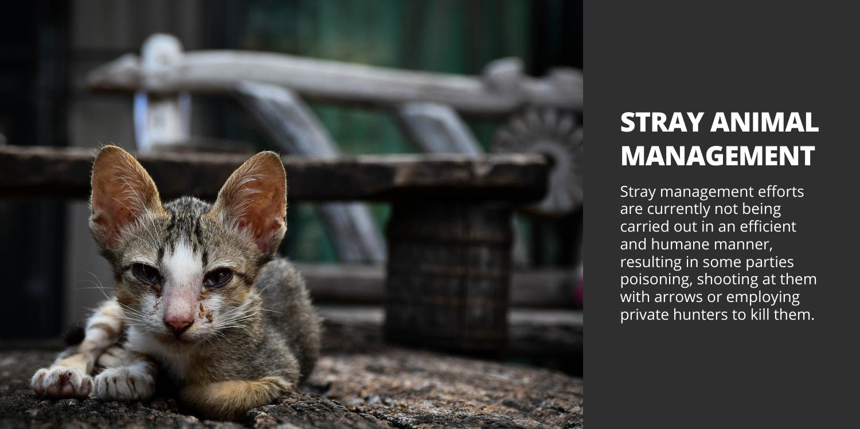 Stray Animal Management